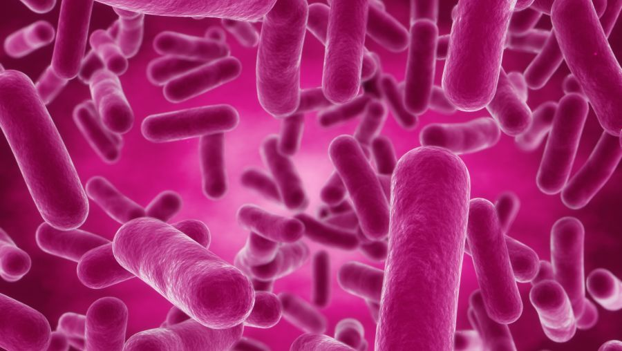 podcast bacillus probiotic for digestive health natural products