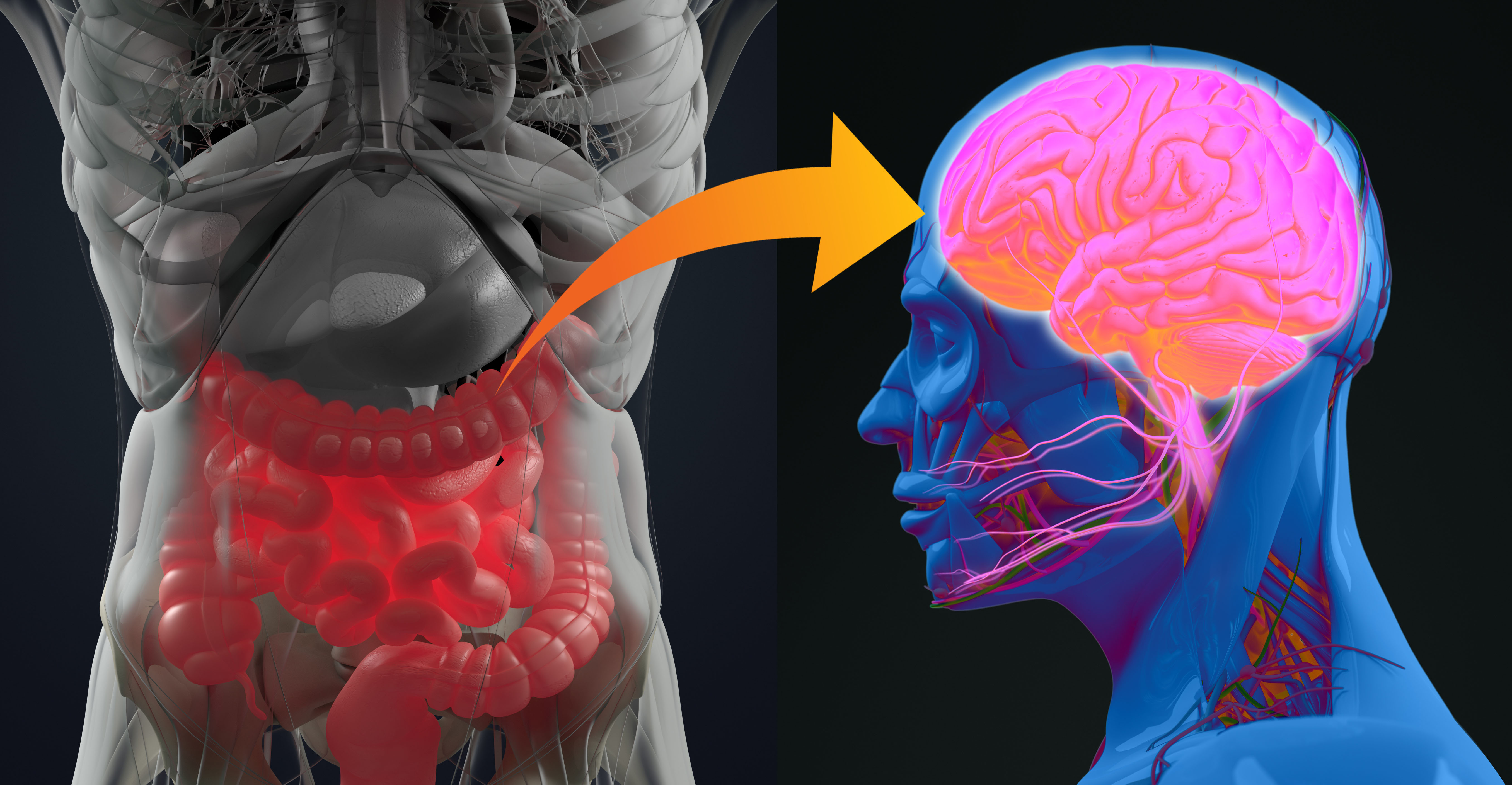 Overlooked Brain Cells May Have Leading >> Probiotics And Psychobiotic Supplements To Improve Mood