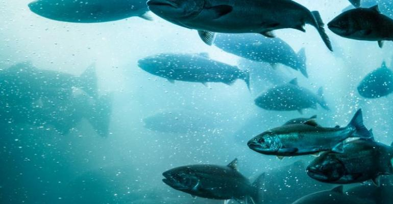 Lawsuit Challenges FDAs Approval of GE Salmon