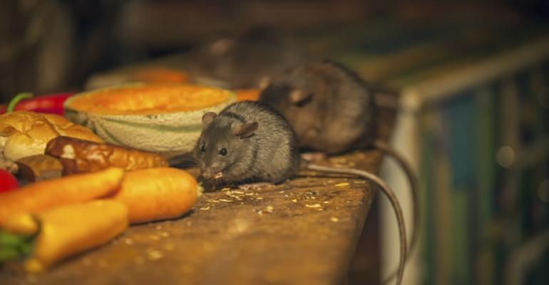 rats_food