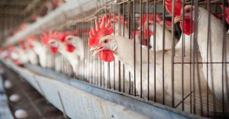 Egg Farmers Prison Sentences Affirmed in Food-Safety Case