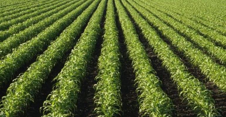 Kellogg, ConAgra Adopt Nationwide GMO Labeling