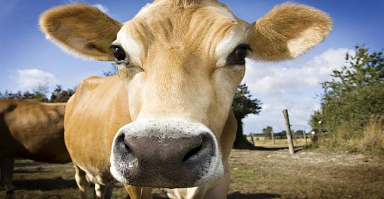 milk_organic_traditional