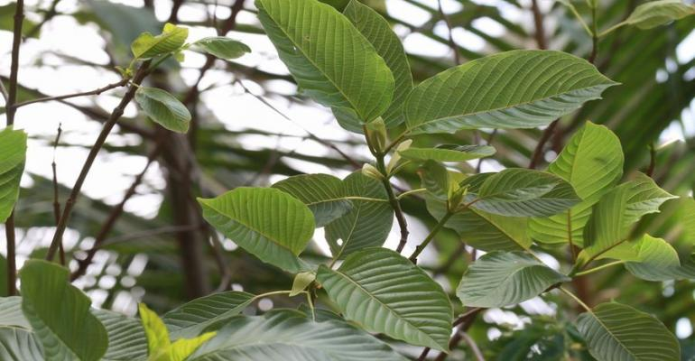 DEA Backpedals on Plan to Outlaw Botanical Kratom