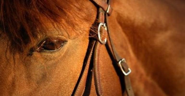 horse_6.jpg