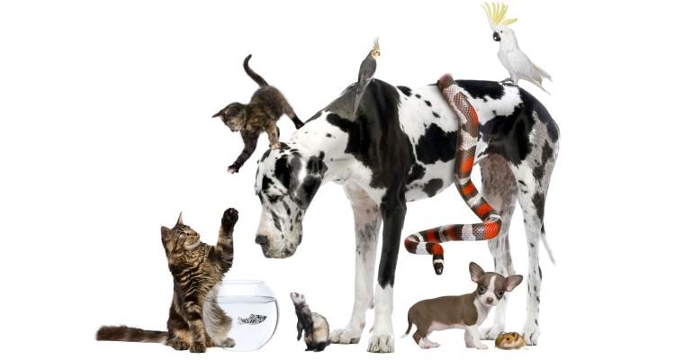 Cats, dog, fish, ferret, birds, snake, hamster