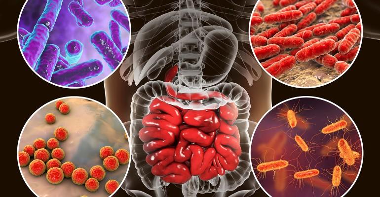 Digestive health takeaways Science sells. Use it..jpg