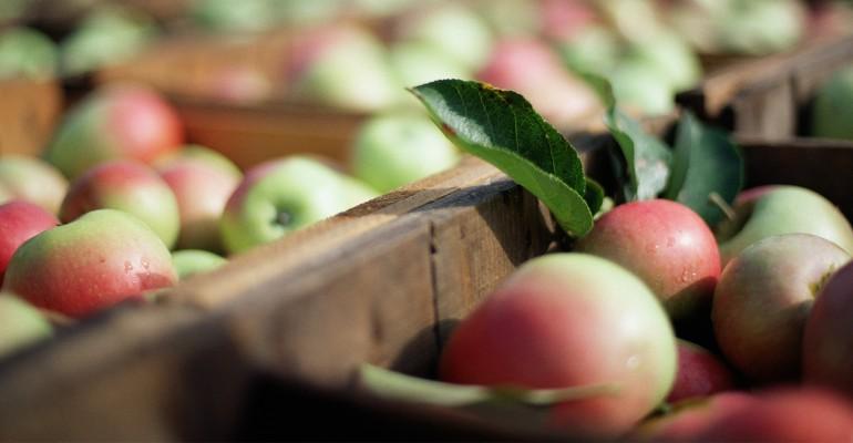 Dried apple peel powder keeps the doctor away.jpg