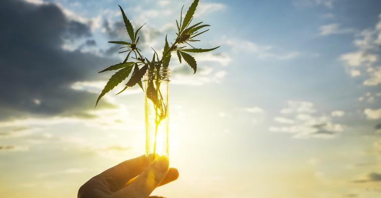 Innovation is key for hemp-derived CBD products .jpg
