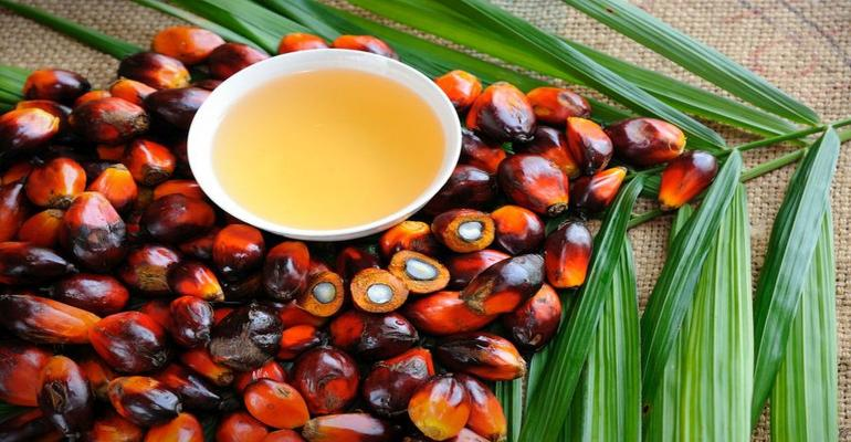 Palm Oil Done Right Natural Habitats