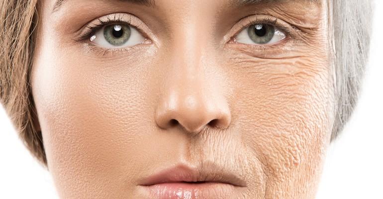 Pathways of cellular aging.jpg