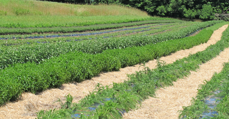 Sustainable herbs program – slide show.png