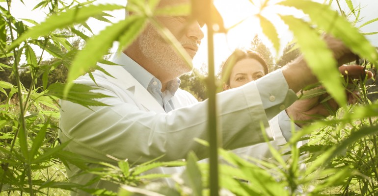 Third-party certification benefits, options in CBD and hemp product industry .jpg