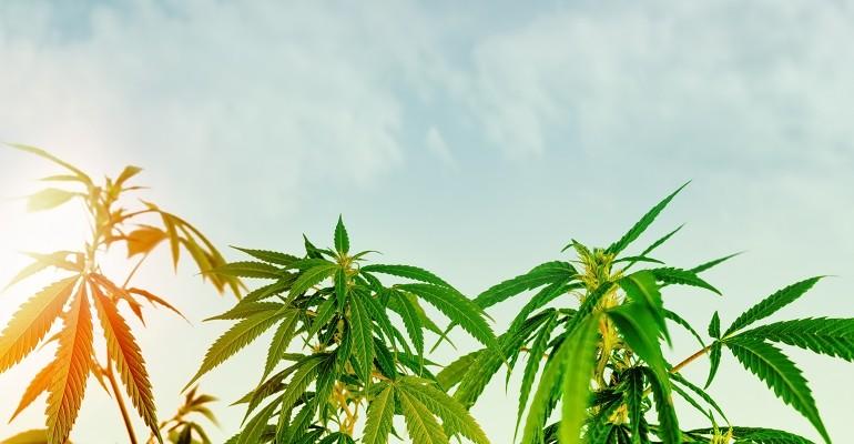 USDA nears completion of final rule for U.S. hemp production.jpg