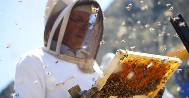 Beekeeper with Honey Tray and Bees