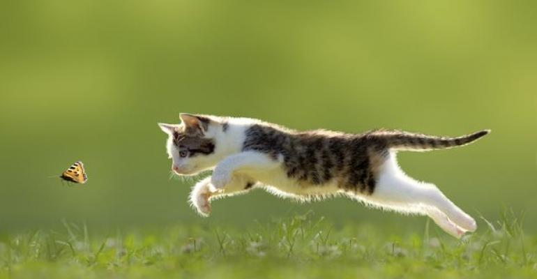 cat_butterfly_6.jpg