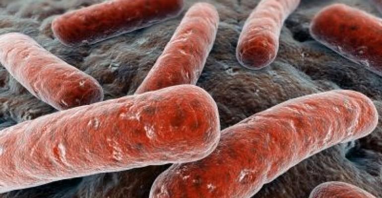 Probiotic Standards