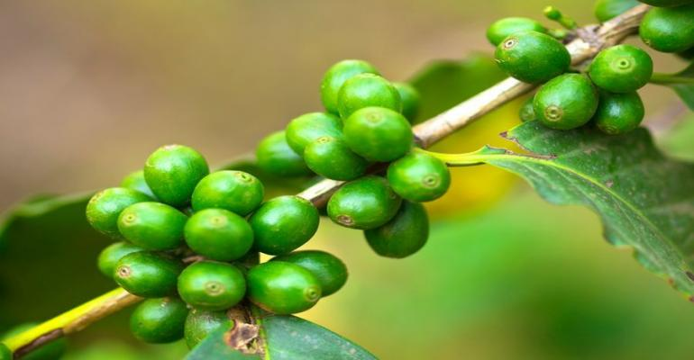 Marketer of Green Coffee Extract Must Forfeit $29 Million