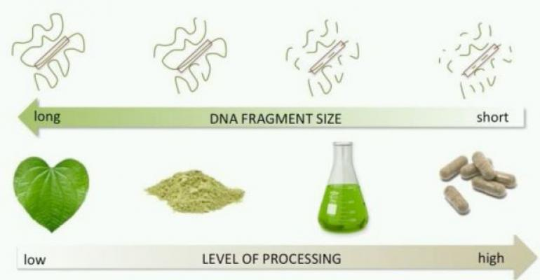 Whitepaper Explains Capabilities, Limitations of Botanical DNA Tests