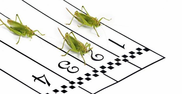 Bugs for Athletes