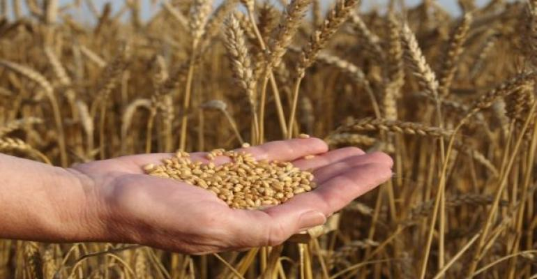 Kansas State, General Mills to Develop New Wheat Varieties