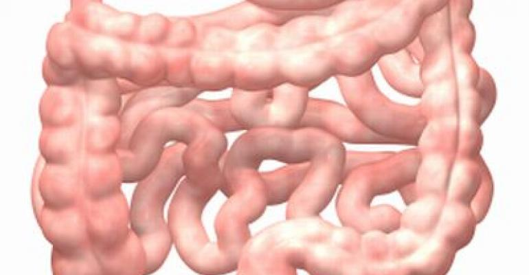 FibeBitoics Puts Gut, Immune Health in Spotlight