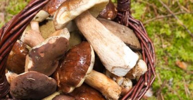 Mushroom Extracts Grow in Longevity Market