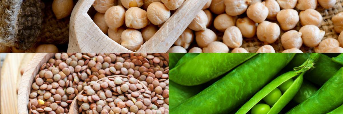 Esca Bona ingredient trend series: Pulses
