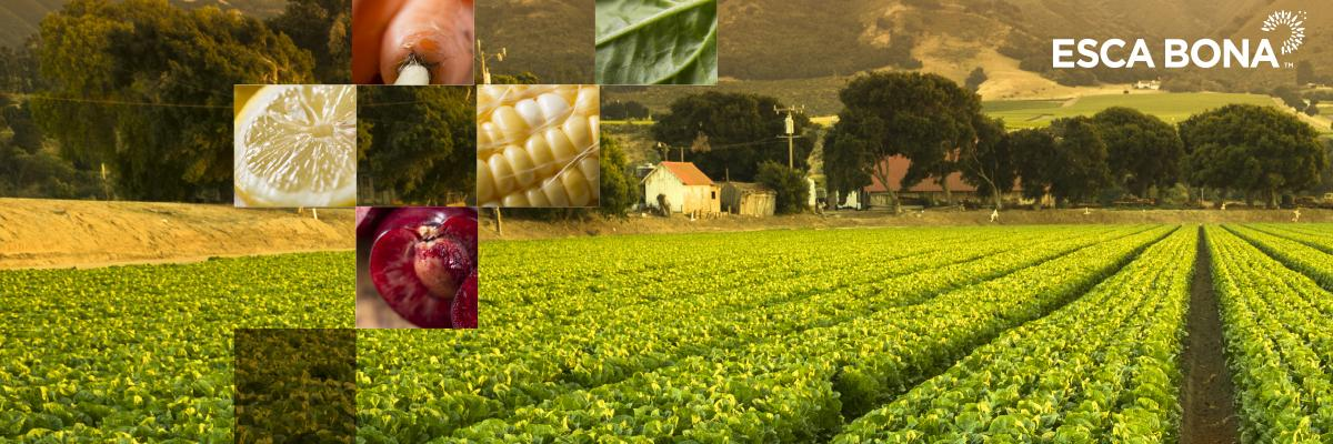 Feeding the Good Food Future - Can regenerative organic agriculture save the planet?