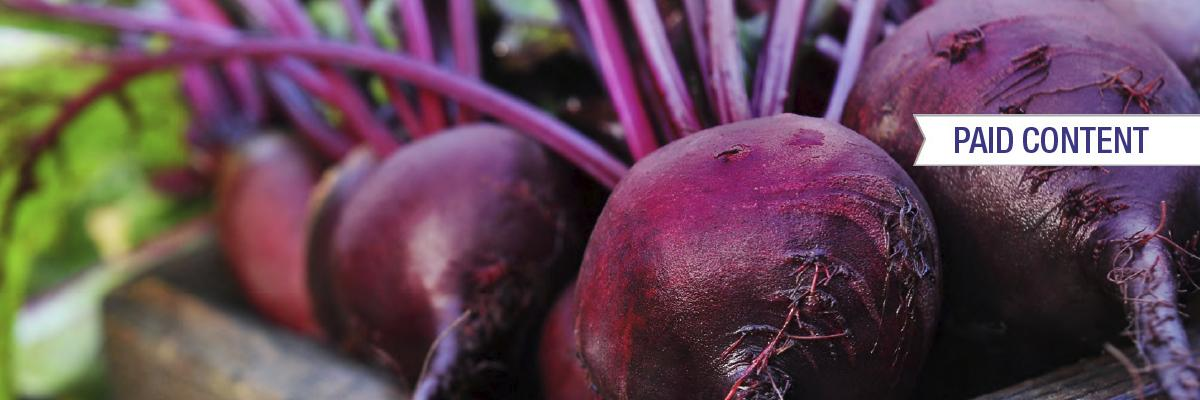 Fermented beet juice - white paper