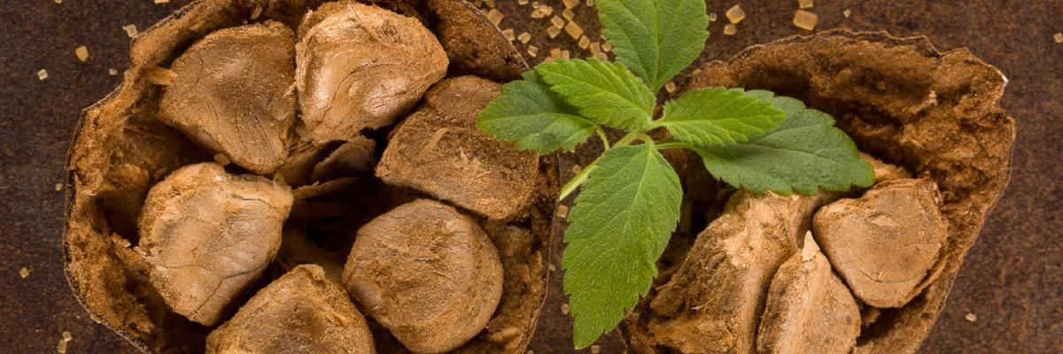 Opportunities in the natural sweetener market – deep dive