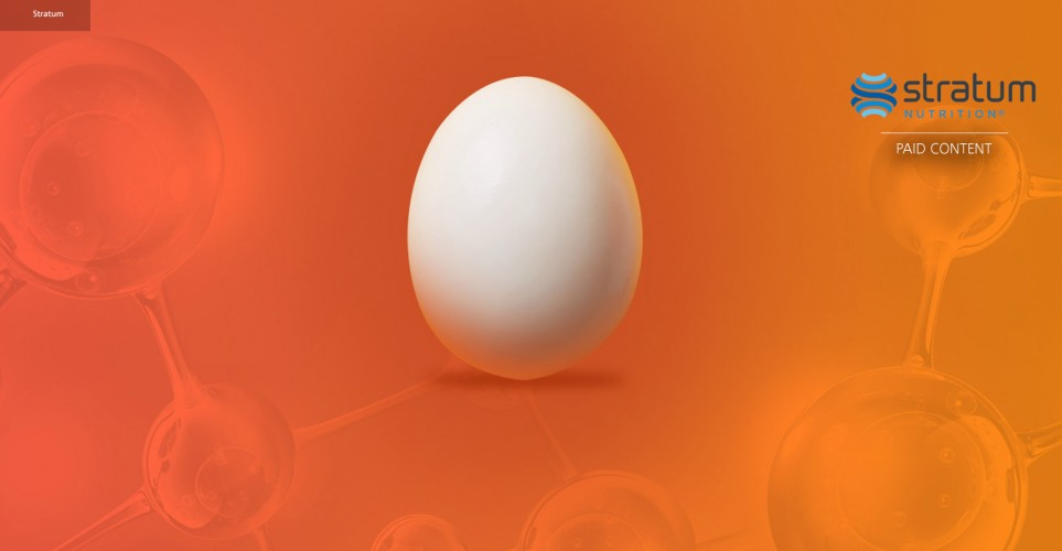 Partially hydrolyzed eggshell membrane for dual action joint support – white paper