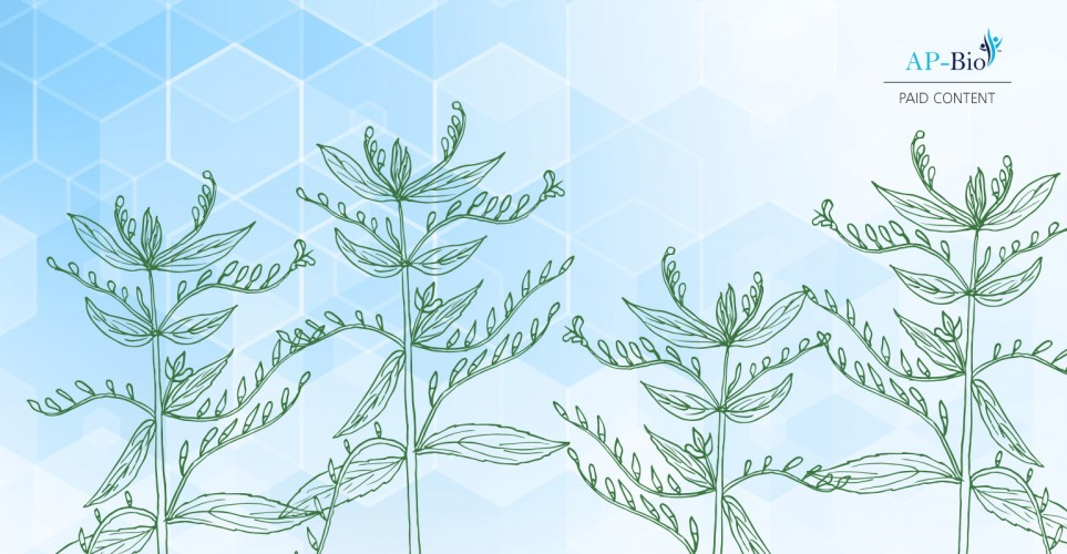 Andrographis: A traditional botanical ingredient that optimizes the immune system – infographic