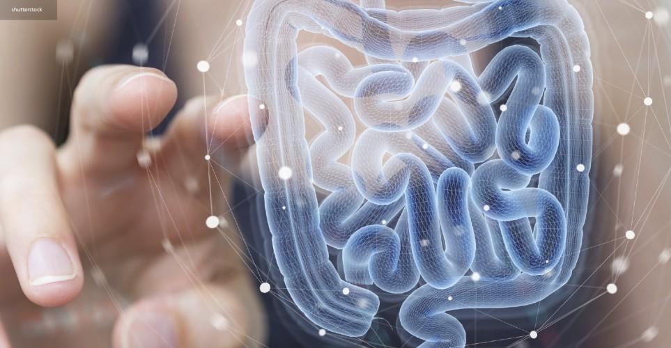 The probiotics era – digital magazine