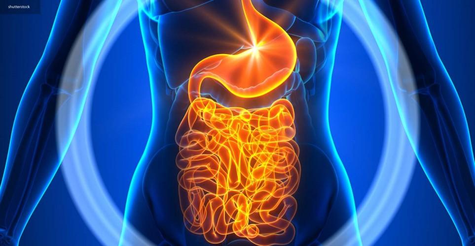 The gut microbiome – digital magazine