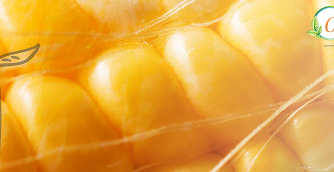 Close-up of corn with Orgenetics logo paid content