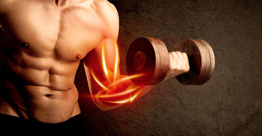 Muscle-building takeaways.jpg