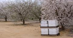 Almond Board of California sustainability blog