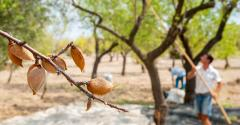 Sustainability in almond farming.jpg