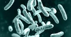 The history of probiotic taxonomy changes.jpg