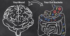 probiotics anxierty.jpg