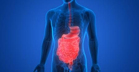 06_25 digestive health NEXTY.jpg
